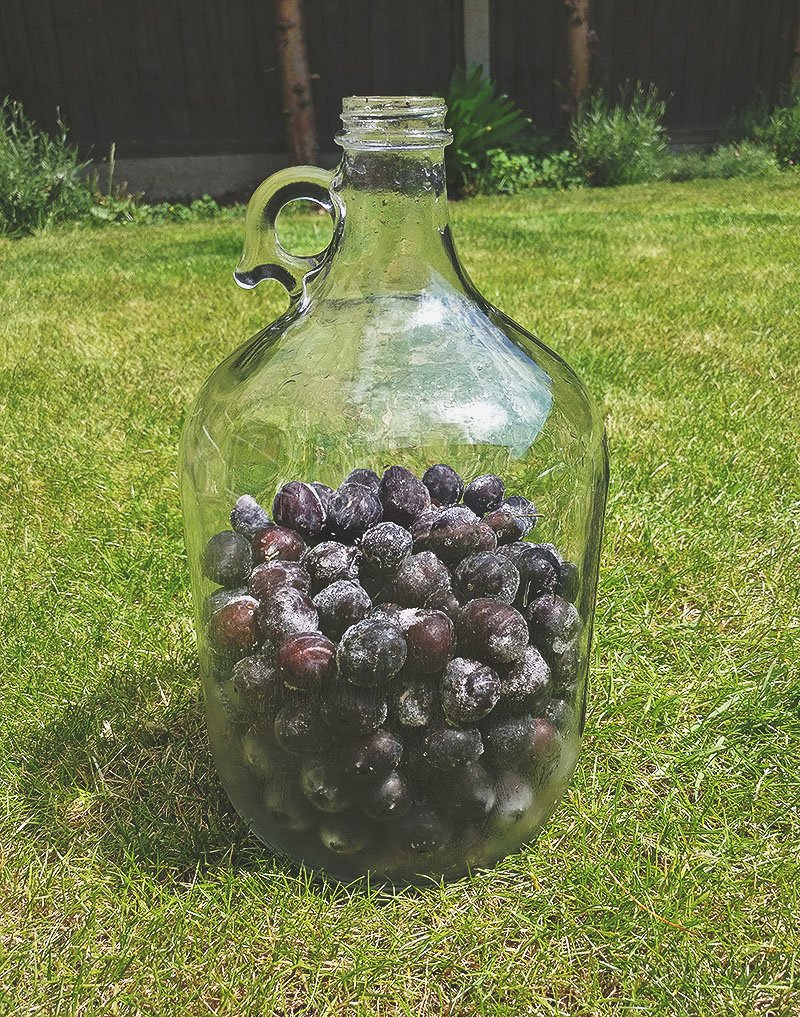 Sloe Berries in Demijohn